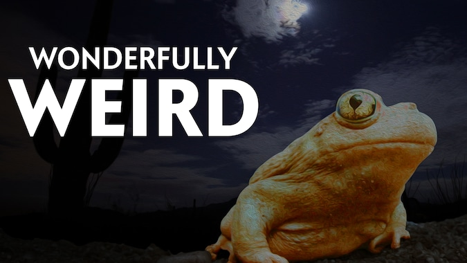 Documentales - Wonderfully Weird