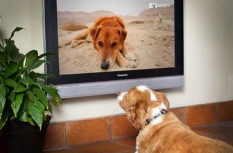 Televisión Para Perros
