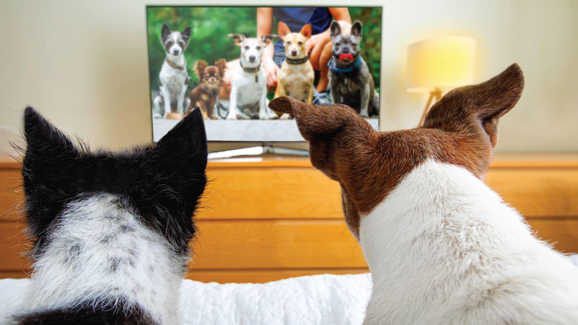 Televisión para perros: ¿Locura o necesidad?